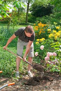 Einfluss der Bodenstruktur im Garten auf gutes Pflanzenwachstum
