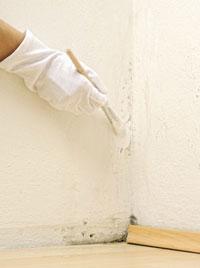 Wandschimmel beseitigen