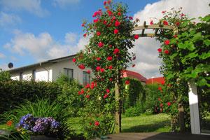 Rosenbogen im Garten – Dies sollten Sie beachten.